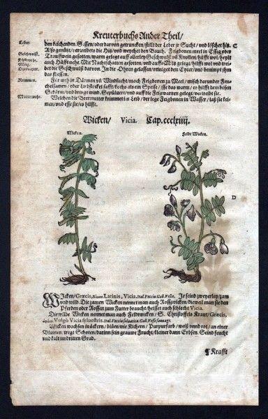 Lupinen Holzschnitt Kräuterbuch Kräuter herbal Lonicer, Adam: