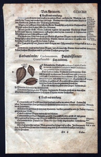 Kardamom Holzschnitt Kräuterbuch Kräuter herbal Lonicer, Adam:
