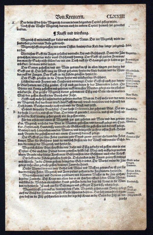 1580 - Spitzwegerich Wegerich herbal Kräuter Kräuterbuch Lonicer Holzschnitt