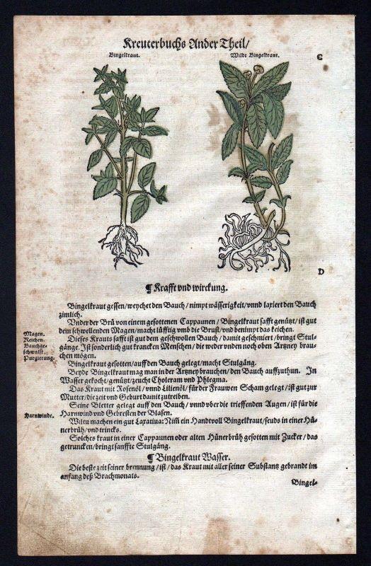 1580 - Bingelkraut Merk Sium herbal Kräuter Kräuterbuch Lonicer Holzschnitt