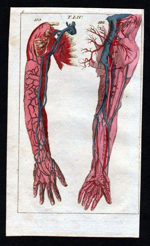 1800 veins Venen arm blood vessels Anatomie anatomy Medizin medicine ...