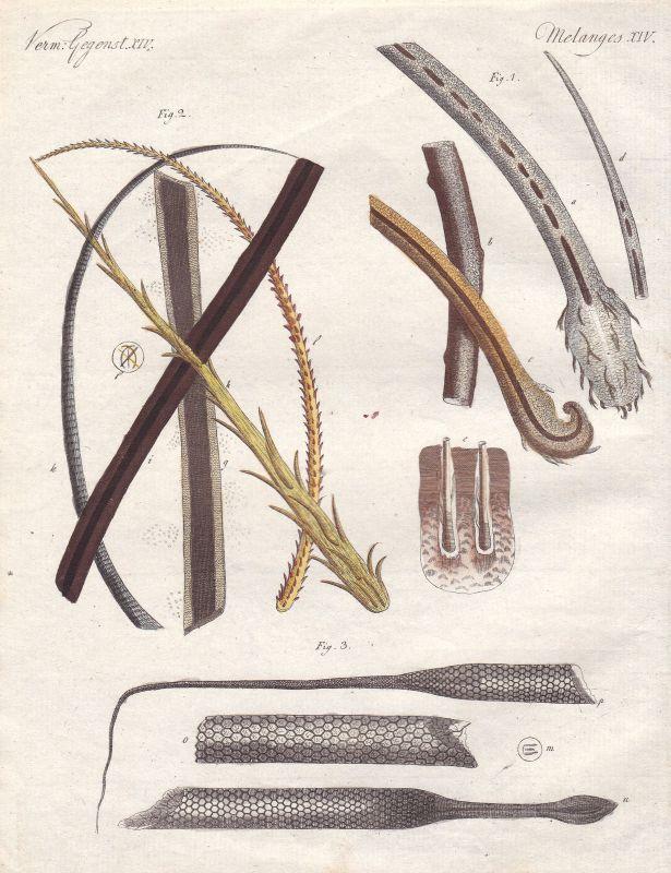 Haare Menschenhaar human deer insects hair Rehhaar Insektenhaare Bertuch 1800