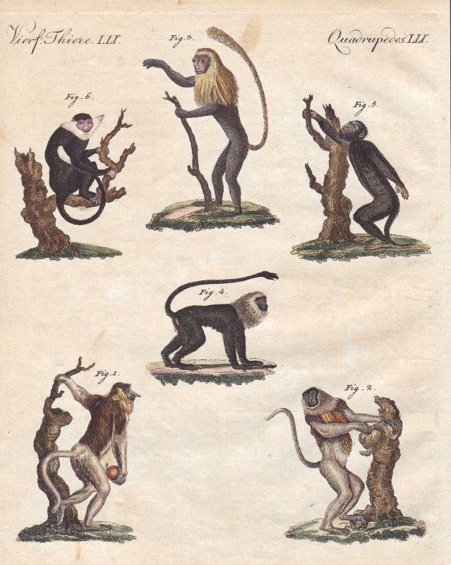 Affe Affen monkeys Primaten primates Brüllaffe howling monkey Bertuch 1800