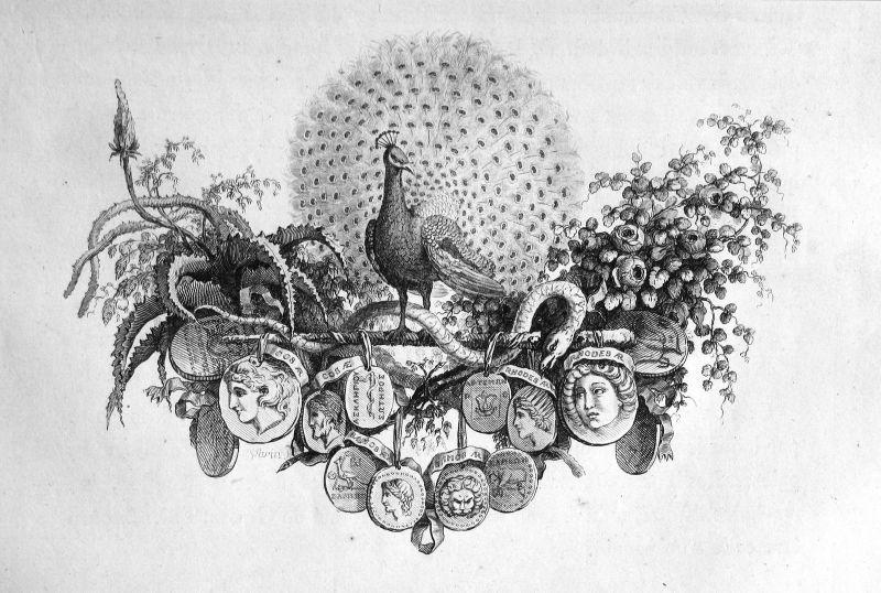 Ca. 1820 Pfau peafowl pheasant Medallien medals Kupferstich antique print 156863