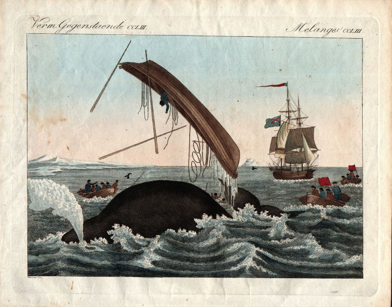 Walfang whaling Wale whales Wal whale Bertuch 1800 Kupferstich engraving