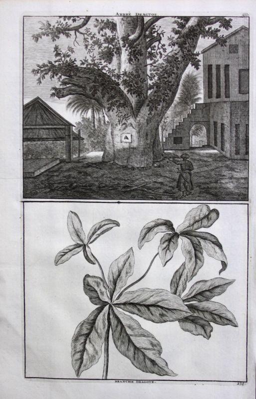 De Brujin Dragtoe Baum Tree arbre Fruit tree Obstbaum Pflanze plant plante 1718
