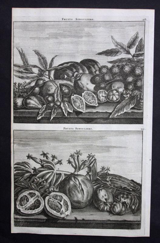 De Brujin Fruits singuliers fruit Frucht Obst Kupferstich antique print 1718