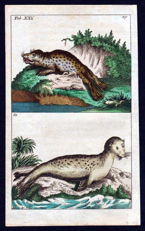 1800 Seekühe sirenia Seekuh Kupferstich engraving antique print