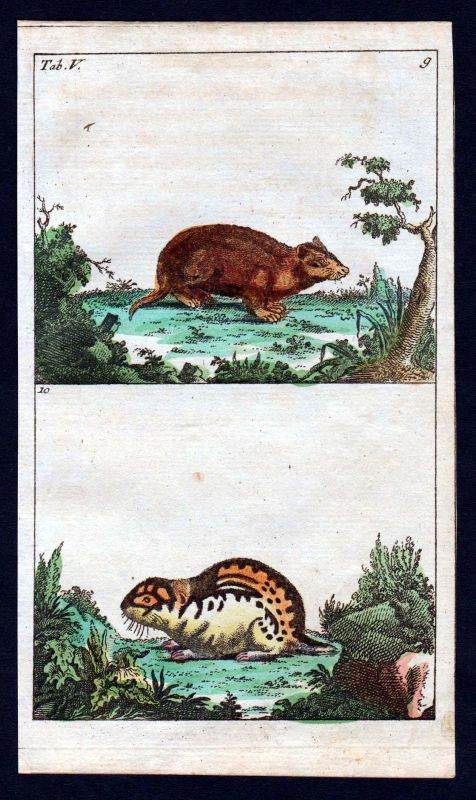1800 Lemming Hamster Lemminge Kupferstich engraving antique print