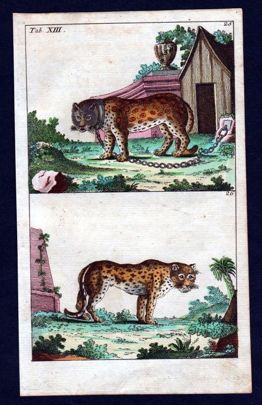 1800 Panther Leopard Großkatzen Kupferstich engraving antique print