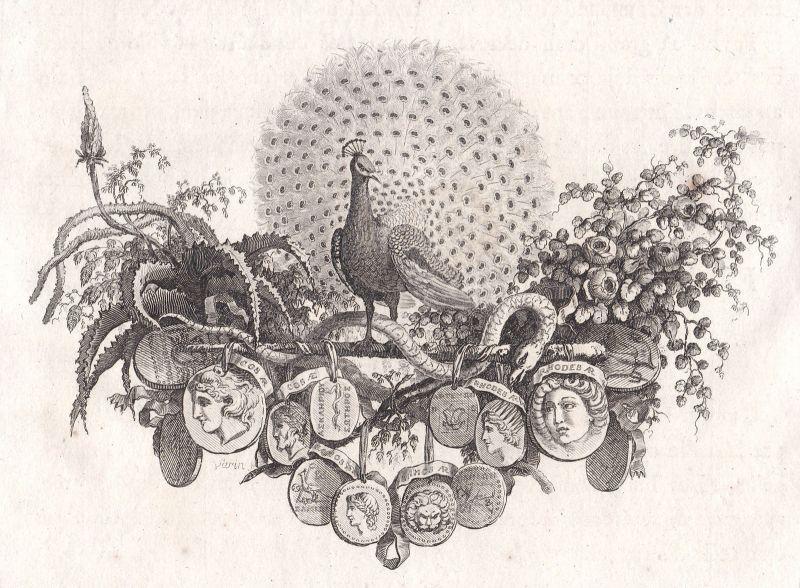 Ca. 1820 Pfau peafowl pheasant Medallien medals Kupferstich antique print Varin 0