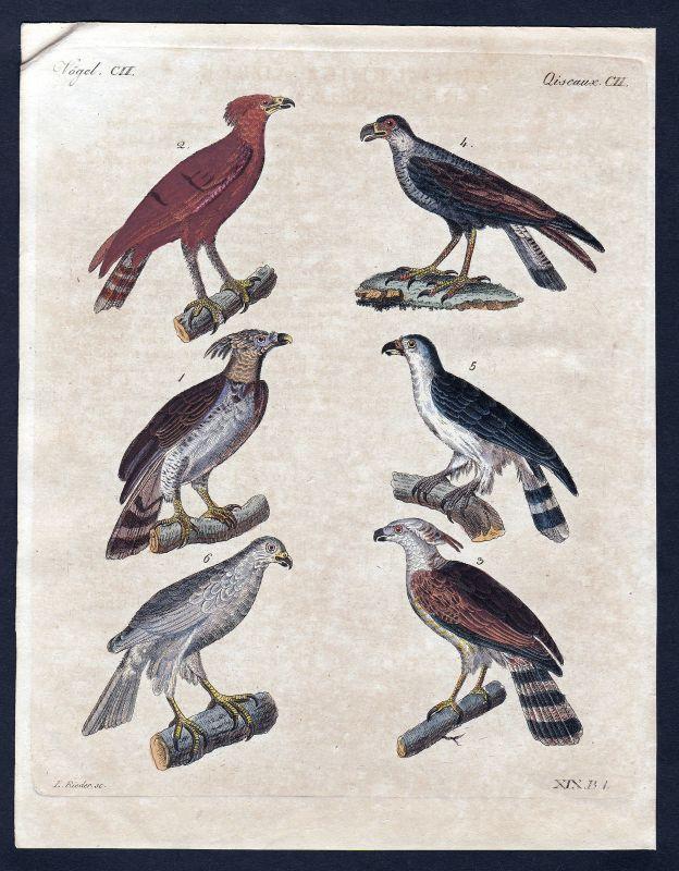 1800 Vogel Vögel bird birds Adler eagle Kupferstich Bertuch antique print