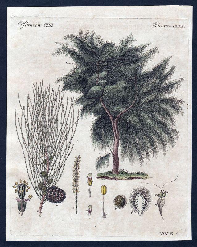 1800 Baum tree Äste branches Pflanze Pflanzen plant plants Kupferstich Bertuch