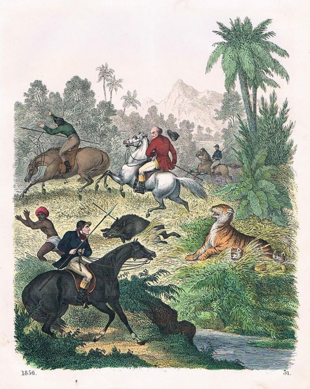 1856 - Jagd Tiger Indien India Jäger hunting Lithographie lithography
