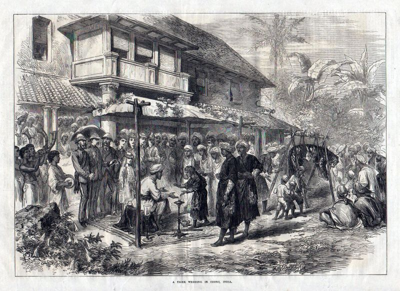 1873 A tiger wedding in Coorg, India. / Kodagu / Indien / Südasie antique print