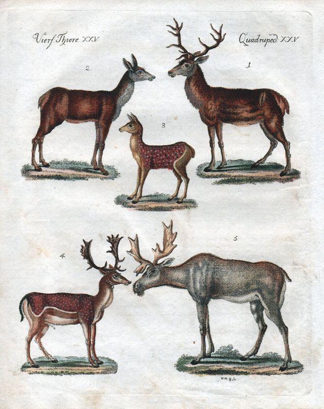 Hirsche Hirschen deer Elenthier elk Damhirsch fallow deer Kupferstich Bertuch