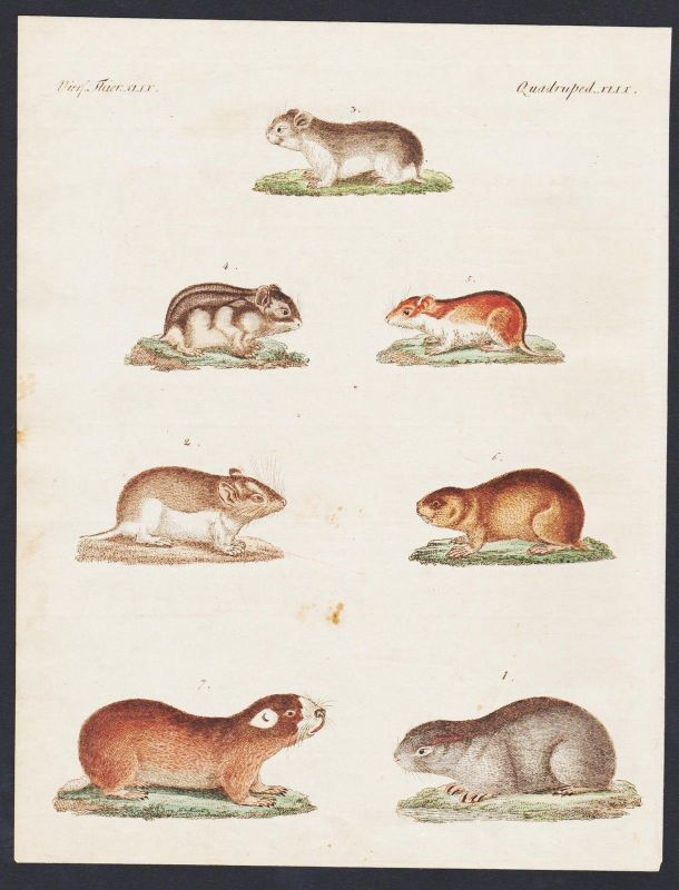 1800 - mouse mice Maus Mäuse engraving antique print Bertuch