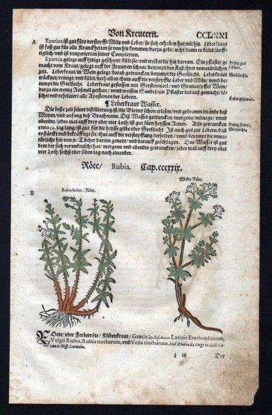 Färberröten Holzschnitt Kräuterbuch Kräuter herbal Lonicer, Adam: