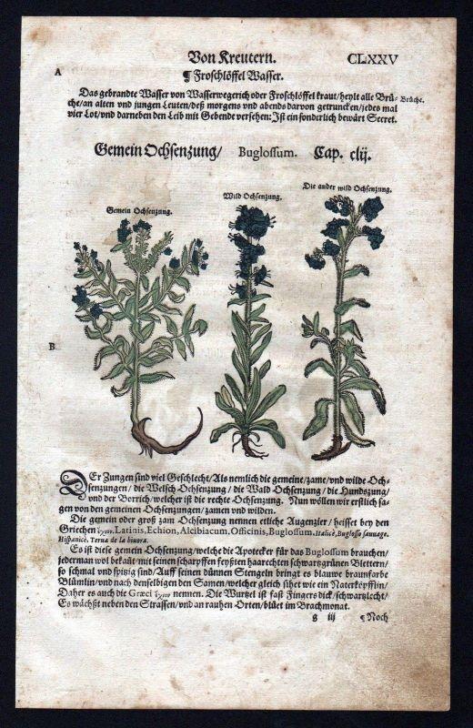 1580 - Ochsenzungen Ochsenzunge herbal Kräuter Kräuterbuch Lonicer Holzschnitt