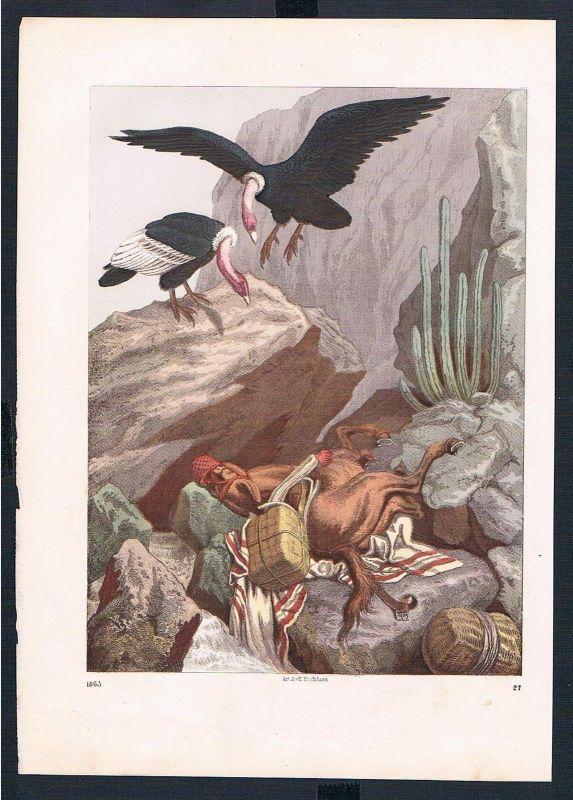 1865 - Geier vulture Pferd horse Sturz overthrow Original Druck print