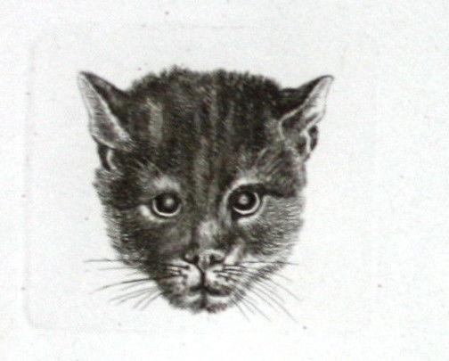 1857 Katze Kätzchen cat Kopf head Kupferstich engraving Carl August Lebschee
