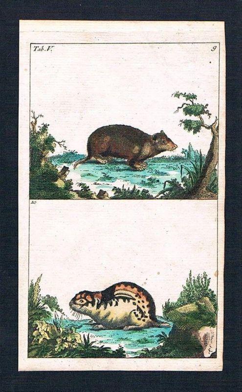 1800 - Mulot Lemming Maus Mäuse mouse animal animals engraving Kupferstich