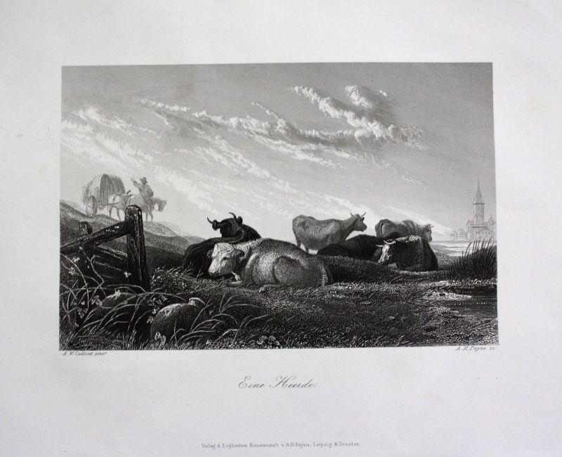 1850 - Kühe Kuh Rinder Weide cow cows Bauer Feldarbeit engraving Stahlstich