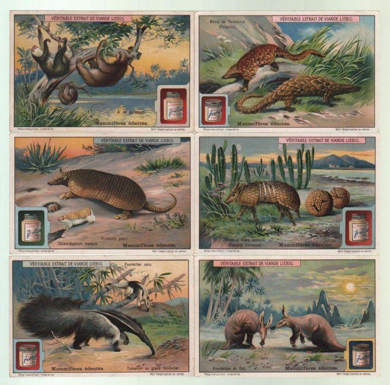 Säugetiere zahnlos mammiferes Mammalia S 1095 Lithographie lithograph Liebig