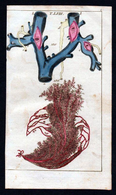 Ca. 1800 Halsvene jugular vein Anatomie anatomy Medizin medicine Kupferstich