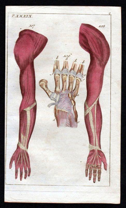 1800 Handwurzel carpus arm hand Anatomie anatomy Medizin medicine Kupferstich