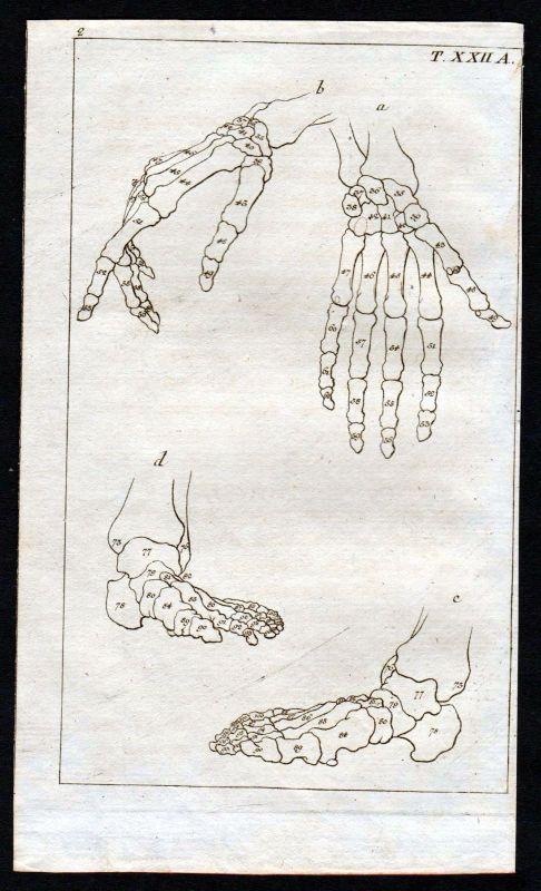1800 Hand Fuß foot bones Knochen Anatomie anatomy Medizin medicine Kupferstich