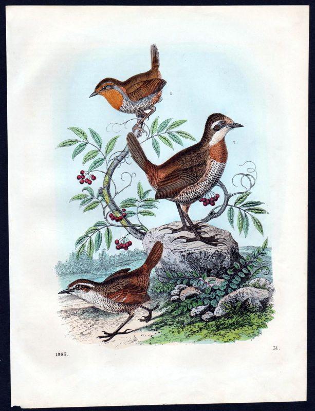1863 Vogel Vögel bird birds Chile South America Lithographie lithograph