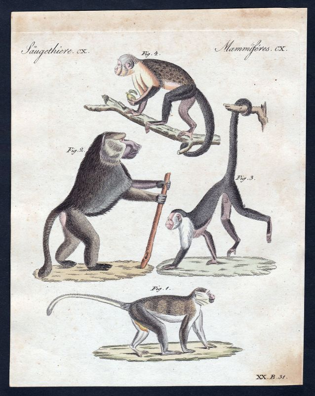 1800 Affen monkeys monkey Affe Säugetier Kupferstich Bertuch antique print