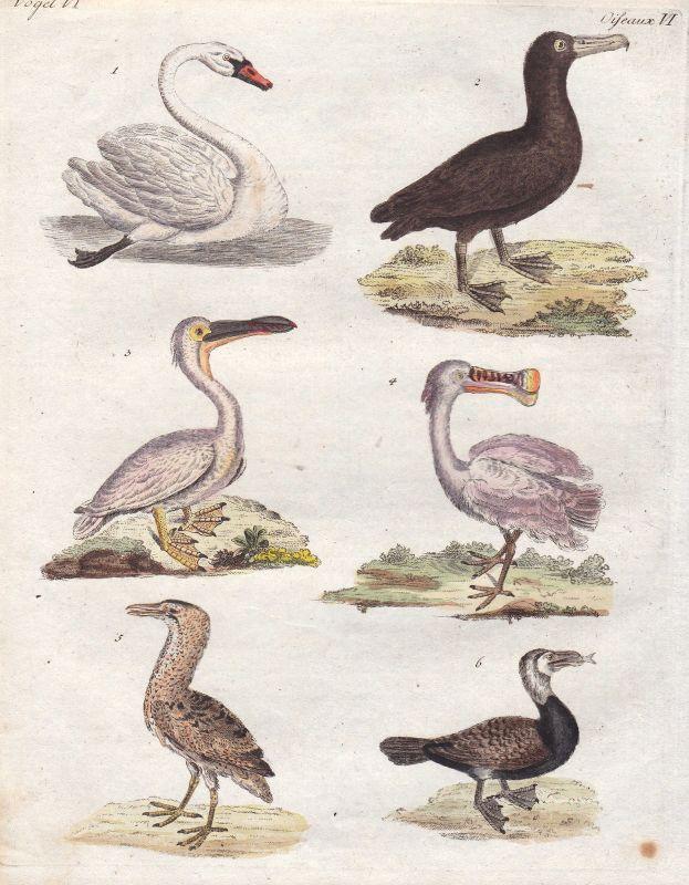 Schwan swan Pelikan pelican Rabe crow Gans goose Vogel bird Vögel Bertuch 1800 0