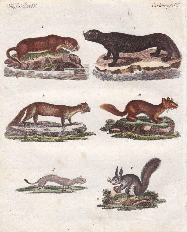 Otter otter Hermelin stoat Zobel sable Fischotter Marder marten Bertuch 1800 0