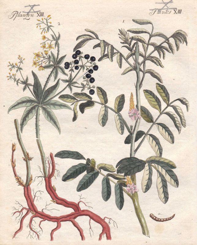 Indigopflanze indigofera tinctoria Färberröten rubia Pflanzen Bertuch 1800 0
