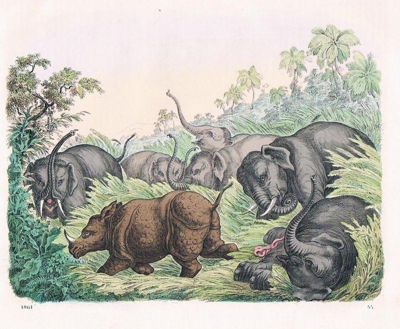 1861 - Elefant Elefanten elephant Nashorn Rhinozeros Lithographie lithography