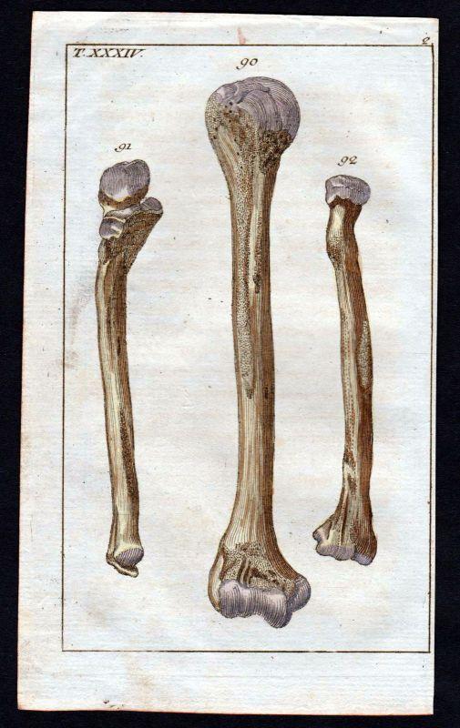 1800 Oberarm Knochen brachium bone Anatomie anatomy Medizin medicine Kupferstich