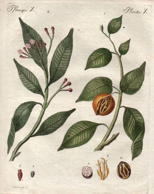 Muskatnuss nutmeg Nelke clove Gewürze spices Botanik botany Bertuch 1800