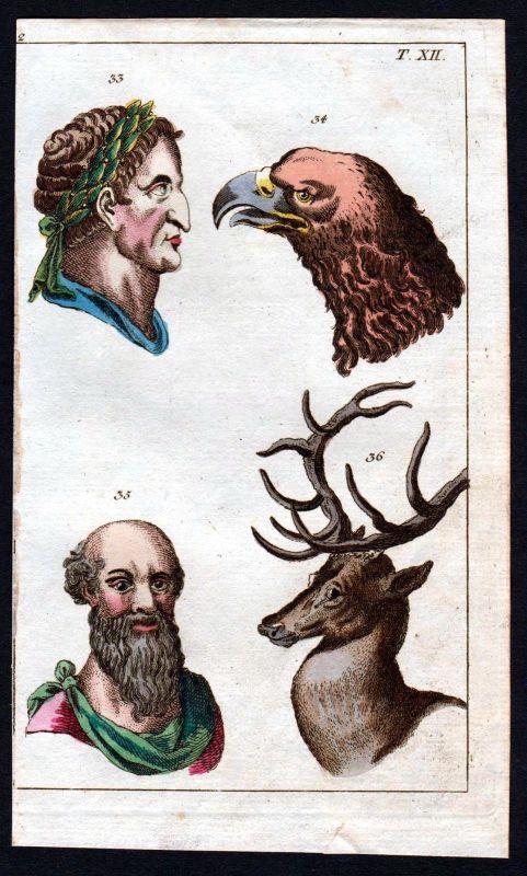 Ca. 1800 face animal human Gesicht Anatomie anatomy Medizin medicine Kupferstich