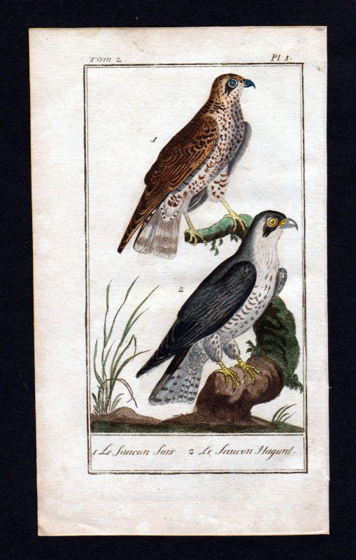 Ca. 1780 Falke hawk faucon Vogel animal gravure Kupferstich antique print Buffon