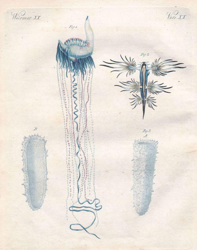 Glaucus Glaukos Meeresgott sea god Wurm worm Würmer worms Bertuch 1800