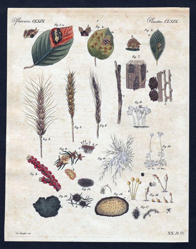 1800 Pflanzen Pflanze plants plant Batt leaf Blätter leafs Kupferstich Bertuch