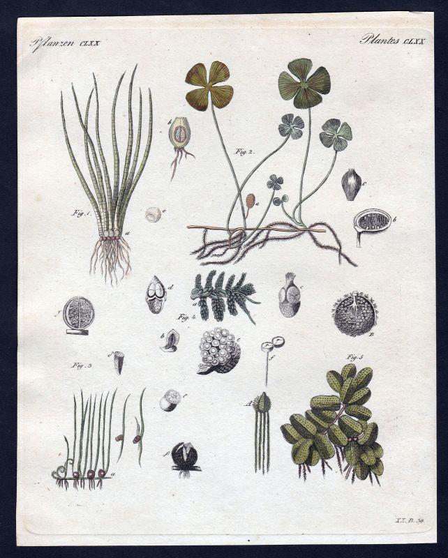 1800 Pflanzen Pflanze plant plants Kupferstich Bertuch antique print