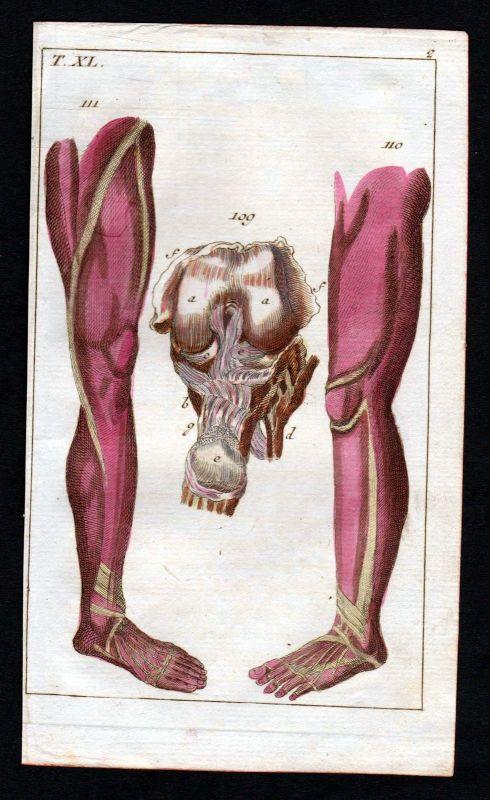 1800 Bänder ligaments Bein leg Anatomie anatomy Medizin medicine Kupferstich 0