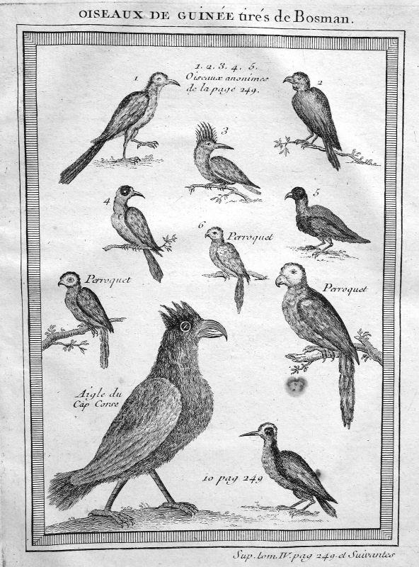 Ca. 1750 Guinea Vogel Vögel bird birds Afrika Africa Kupferstich antique print