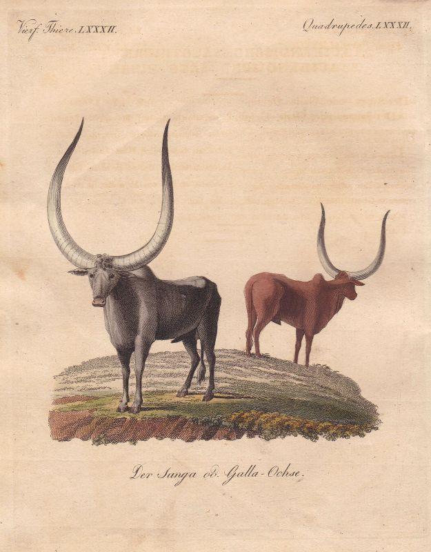 Rind cow Ochse ox bullock Bulle bull Stier Stiere Ochsen Rinder Bertuch 1800