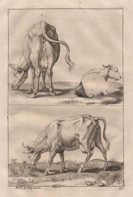 Kuh Kühe Hausrind Rind Rinder cow cows steer etching Kupferstich antique print