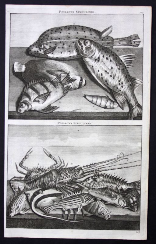 De Brujin Poissons Fische Fisch fish Indonesia Indonesien Asia Asien 1718