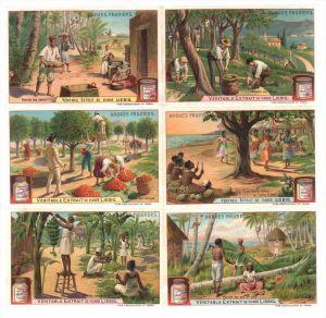 Kokos Banane Brotbaum Orange Olive Datteln Lithographie litho Liebig Chromo